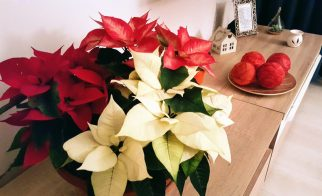 Christmas_deco (5)